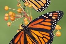 Butterflies / Butterflies, monarch butterfly, butterfly art