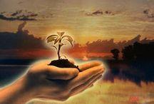 """""""Permita-me ser apenas gratidão - Um fruto útil no jardim do mundo*** / Entre Cores e Flores"""