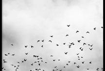 poster met vogels