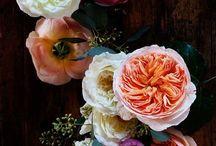 Blumen / garten / Schöne bilder