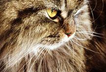 Mojito / Mi preciosa gatita
