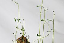 Ecole : projet germination - mater