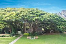 ハレナネア・ガーデンウエディング / ハワイ・オアフ島「ハレナネアガーデン」のウェディングボード。  知る人ぞ知るハワイの秘境の地「ハレナネア」。 この800年の歴史をもつプライベートガーデンは、神秘的な大樹のモンキーポッドが空間をつつみ込みます…♡ 他にはないハワイの大自然の中で、特別なガーデンウェディングを実現してください♪