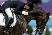 Equestrian inspiration / Dressage and icelandichorse