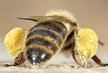 bee pollen balls & other stuff / random pins with original comments / by christin
