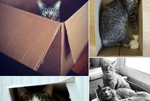 Storage Cats / Need we say more?