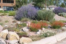 Wyoming gardening / by Kathy Kurtz