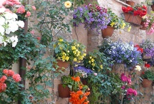Çiçek ve Huzur