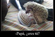 funny spanish
