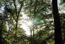 Wandern in der Eifel im Bitburger Land / Landschaftliche Vielfalt, Idylle, Ruhe und Entspannung - das Bitburger Land (Südeifel) ist ein Paradies für Wanderer