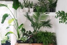 plants indoor