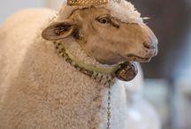 Antique sheeps