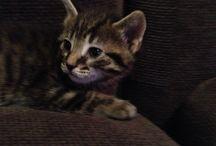 Wesley / Vivere con un gatto!!!!