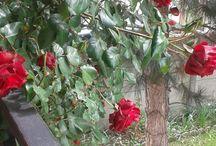 Garden/Floral