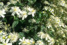 Mina blommor & trädgård