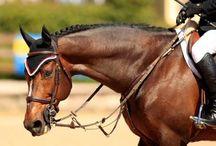 Horses / by Averi B