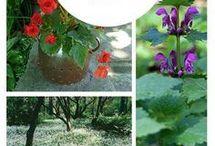 Planter  - skygge