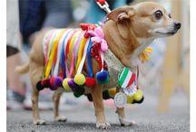 San Antonio Fiesta/Pooch Parade