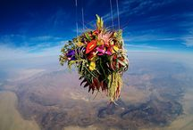 Flowers from the space