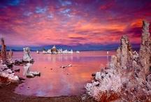 Pink and purple / by Nancy Kroeker Boothe