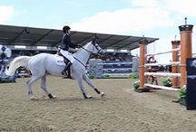 Cavalli  Horses.