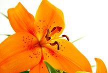 Touches of Orange Color