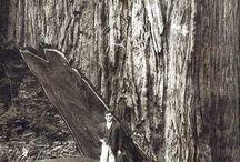 ağacı 140 metre