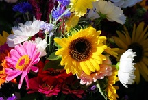 Plants (flowers and more) -- seen in the wild, in gardens, farmers markets, landscaping,