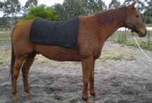 alpaca saddle blankets