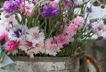 Buckets of Flowers / Basket of Flowers, Buckets of Flowers, More Flowers