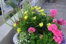 Flower planter ideas
