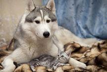 Wolf & kitten