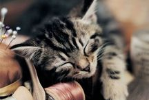 Cats and kittens / by Patricia Kuhnle