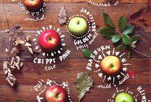 Aby děti rády jedly / Co můžete dělat pro to, aby se děti u jídla bavily a měly k němu zdravý vztah