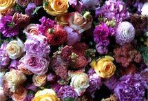 My Flower Garden - Roses