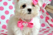Poochies & Poochie Presents / Treat recipes for dogs. Cute photos of dogs.  / by Cherished Handmade Treasures