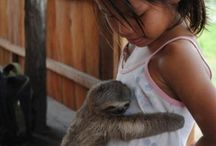 Sloths / Just because I love sloths!  :)