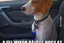 :)))humor