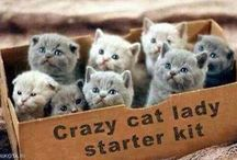 (>'.')>Cat Lady<('.'<)