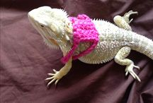 Bearderd dragon crochet ideas