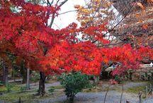 南禅寺・永観堂 / 秋の京都と言えば紅葉です。一番の見頃である、11月末に撮った京都南禅寺・永観堂です。