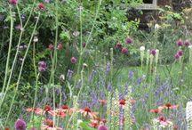 Garden Design: Perennial Cool