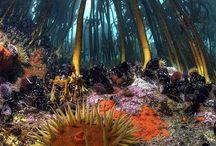 Buceo / Imágenes marinas y buceo