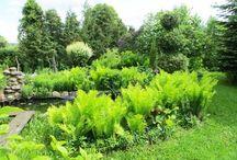 Ботаника / Растения комнатные и садовые, ландшафтный дизайн