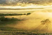 Mistige morgen / Landschappen waar s`morgens overal tot laag aan de grond mistig zijn. Mooi om te fotograferen!