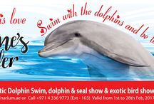 """Valentine Treat / Love is in the air and we wanted it to be very special for you. Get this once in a lifetime experience as we bring you this Valentine Offer.  For only AED550 per person you will swim with the most lovable creatures at Dolphin Planet, watch the dolphins and seals perform live on stage and experience UAE's Only Exotic Bird Show. Get the best day out ever! Remember advance booking is essential. Call: +971 (4) 336 9773 ext 103   or   Email: swim@dubaidolphinarium.ae"