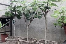 altan och trädgård