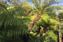 Hardy Tropicals / Achieving the Jungle look in UK gardens