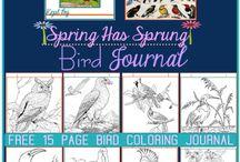 BIRDS / by Kari