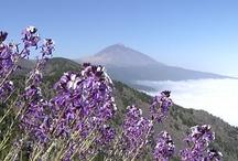 Kanarische Inseln / Canary Islands / Die Kanaren - Teneriffa, Gran Canaria, Lanzarote, Fuerteventura, La Palma, La Gomera, El Hierro